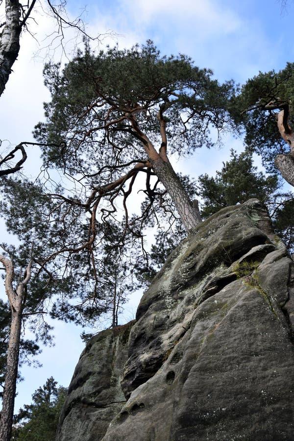 Falaises de grès dans le paradis de Bohème - les roches de Prachov - arbre sur le dessus images libres de droits