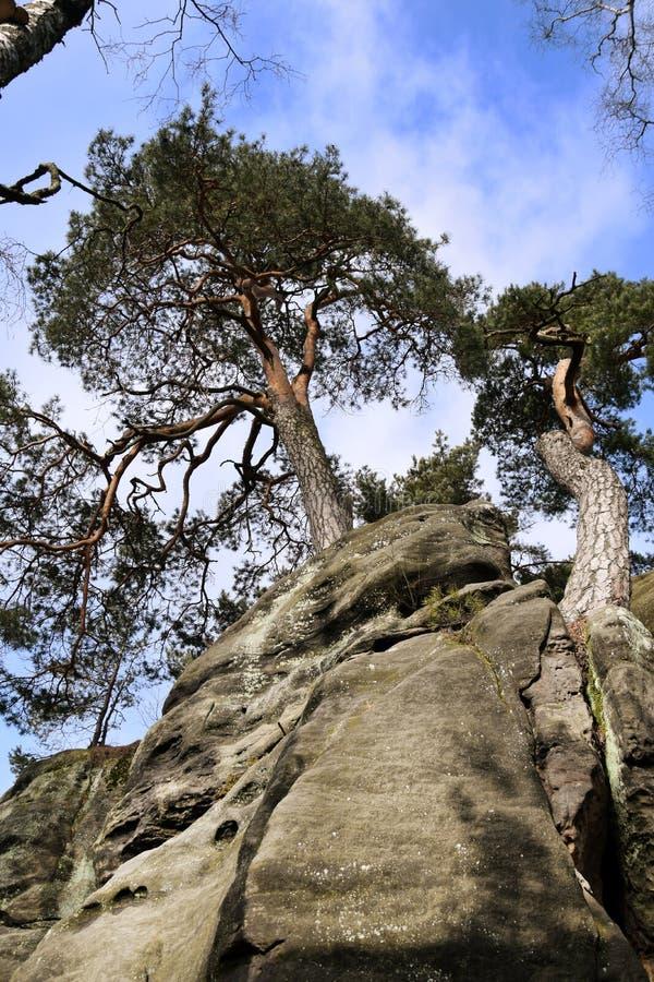 Falaises de grès dans le paradis de Bohème - les roches de Prachov - arbre sur le dessus photographie stock libre de droits