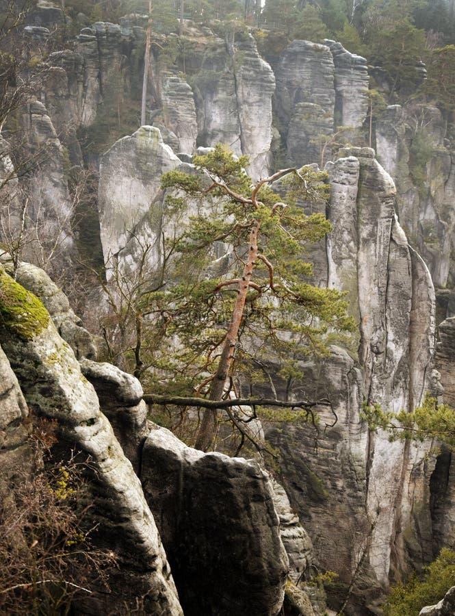 Falaises de grès dans le paradis de Bohème - les roches de Prachov - paysage photographie stock