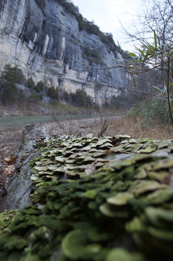 Falaises et arbre par la rivière de Buffalo, Arkansas photo stock