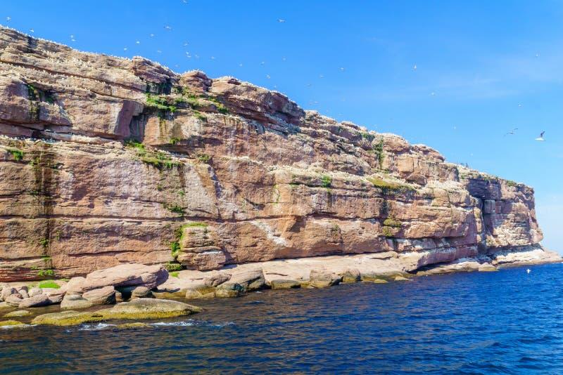 Falaises et oiseaux dans Bonaventure Island image stock