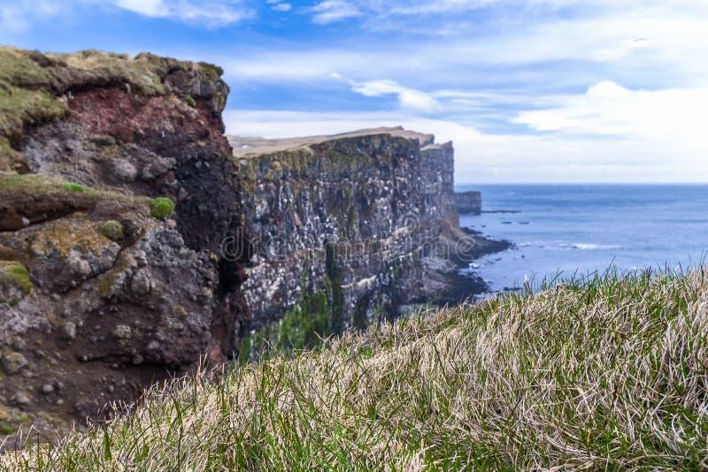 Falaises Westfjords, Islande d'oiseau de Latrabjarg photos libres de droits