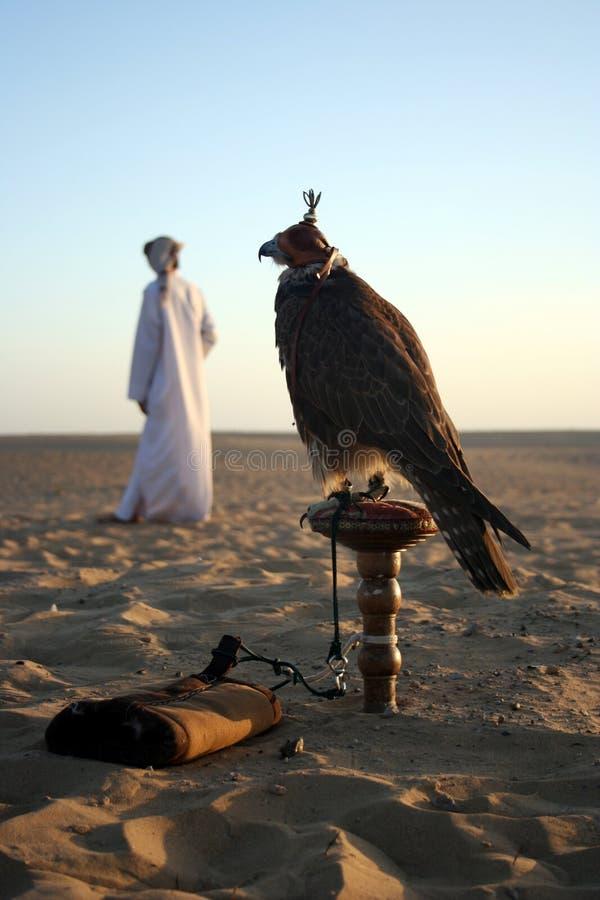 Falcão árabe imagens de stock