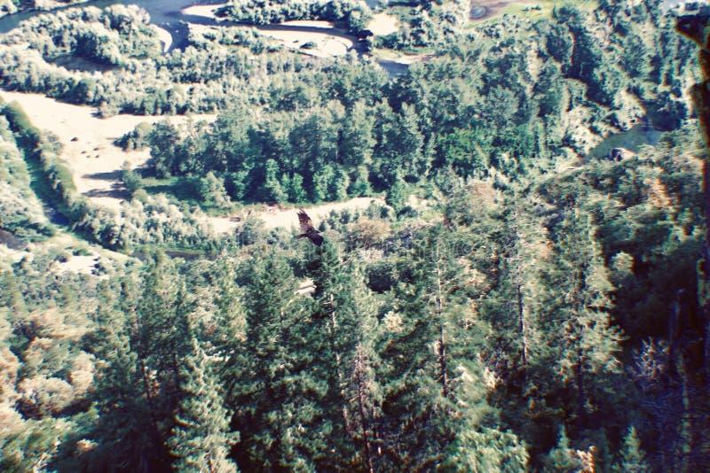 Falcão vermelho da cauda pela montanha da rocha da tabela foto de stock