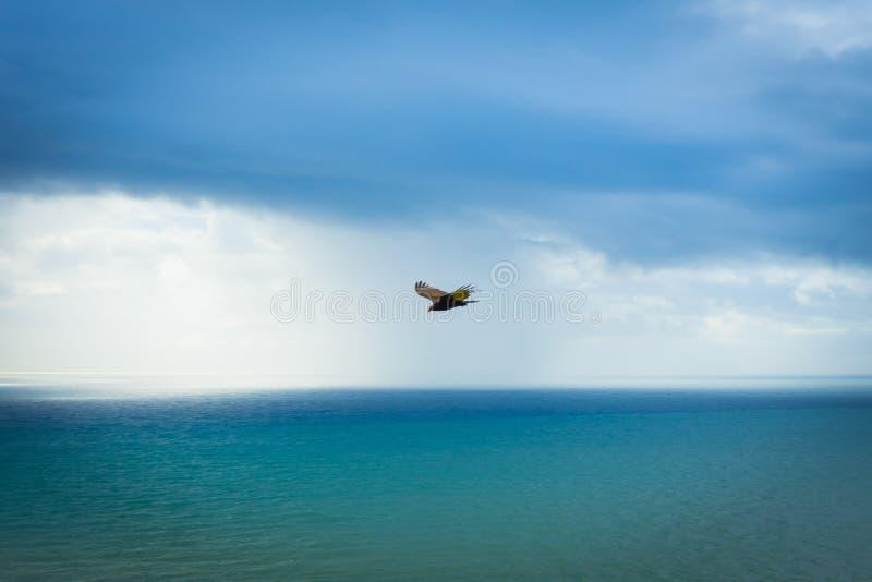 Falco nel parco di stato di Sonoma immagine stock libera da diritti