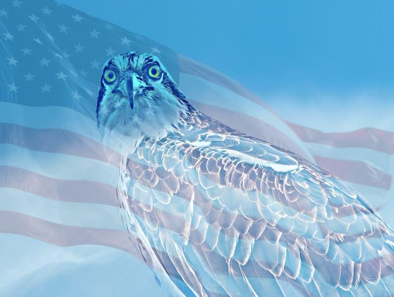Falco pescatore che fissa con la bandiera fotografie stock libere da diritti