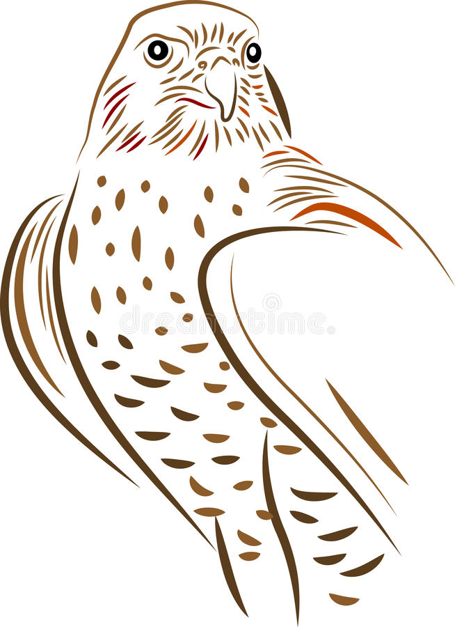 Falcon stock illustration