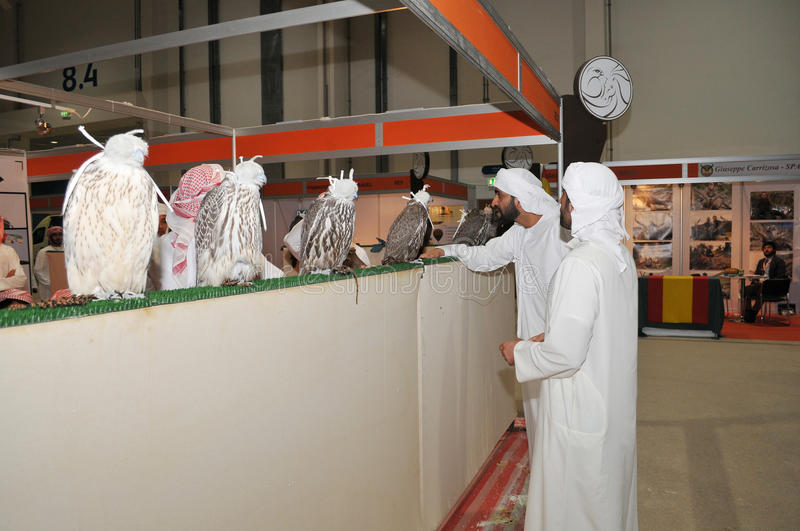 Falcon show at Abu Dhabi International Hunting and Equestrian Exhibition (ADIHEX) royalty free stock images