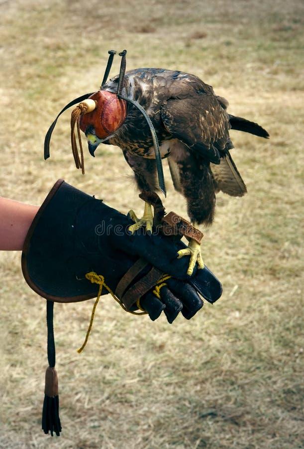 Falcon forex course download