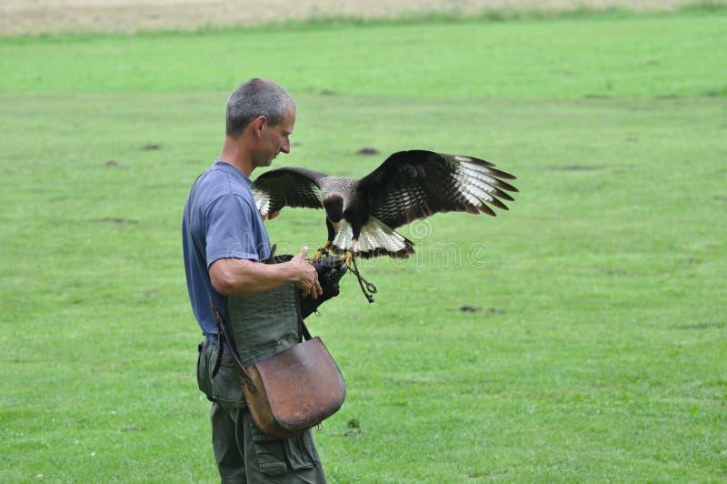 Falconer και αετός στοκ εικόνα