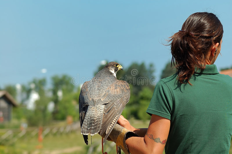 Falconer. Young women falconer and bird stock images