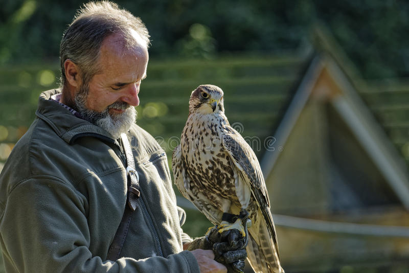 The falconer Mursa showing out falcon. Falconer carrying a Falcon on his arm,Burg Regenstein,Falconry Harz,Germany royalty free stock photo
