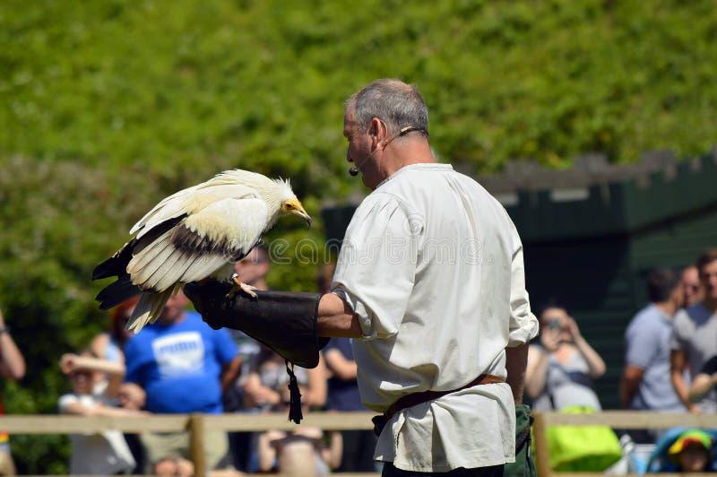 Falconiere con un avvoltoio egiziano immagini stock