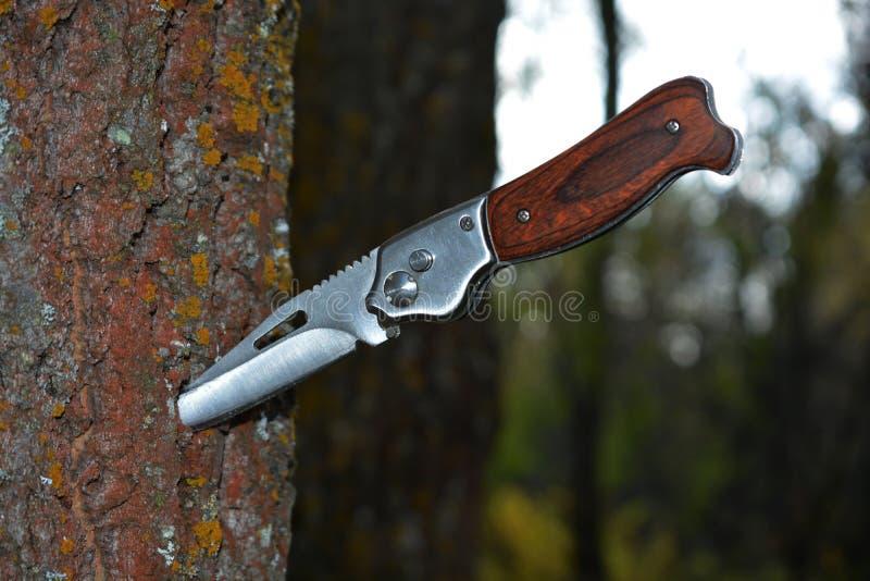 Falcowania nożowy klejenie z drzewa w lesie zdjęcie stock