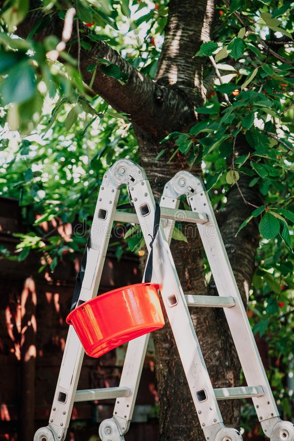 Falcowanie schody aluminiowi stojaki pod drzewem zdjęcie royalty free