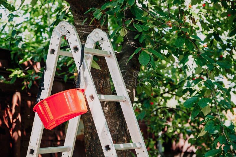 Falcowanie schody aluminiowi stojaki pod drzewem fotografia stock