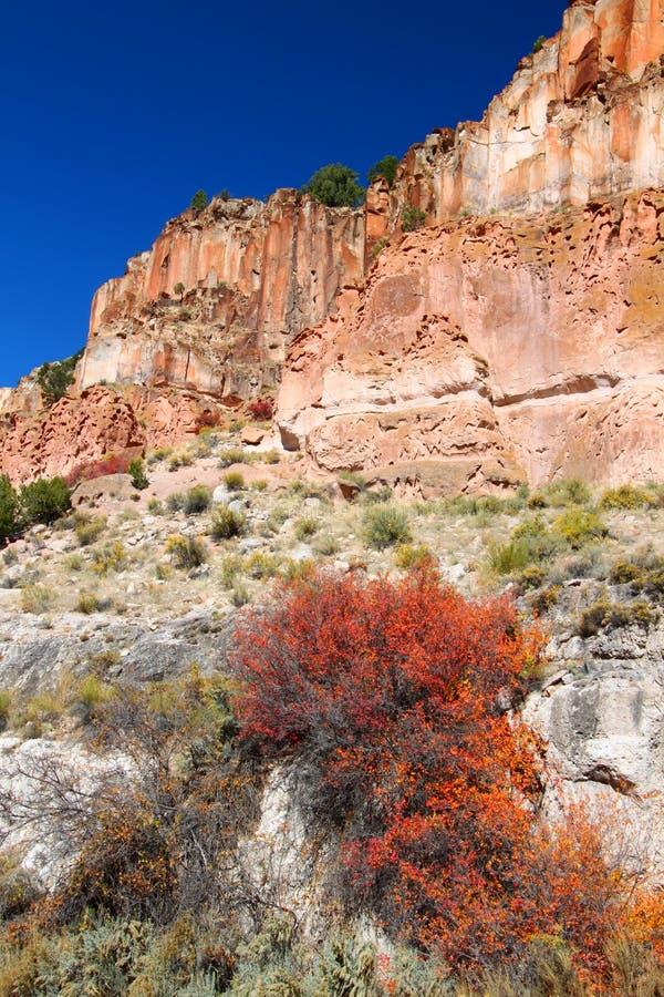 falez skaliści Utah wildflowers obraz stock