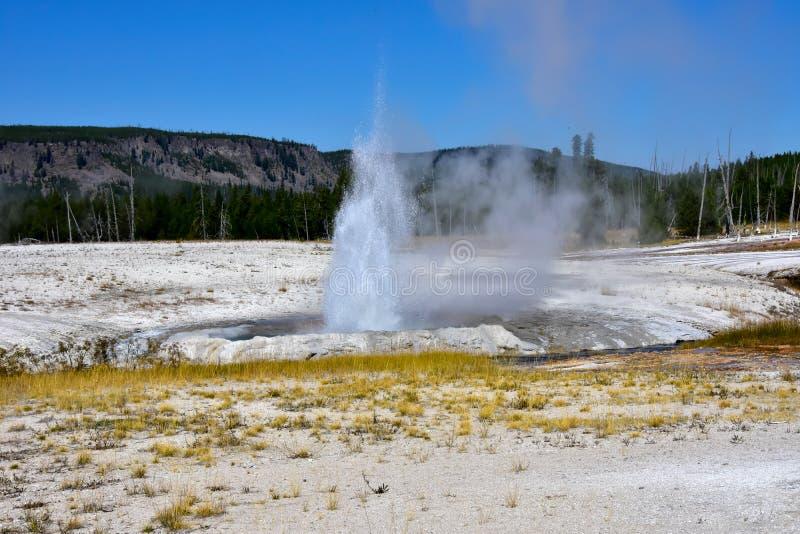 Faleza gejzer wybucha przy Yellowstone parkiem narodowym obraz royalty free