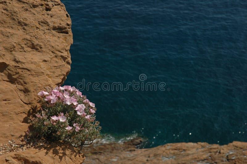faleza kwiaty zdjęcia royalty free