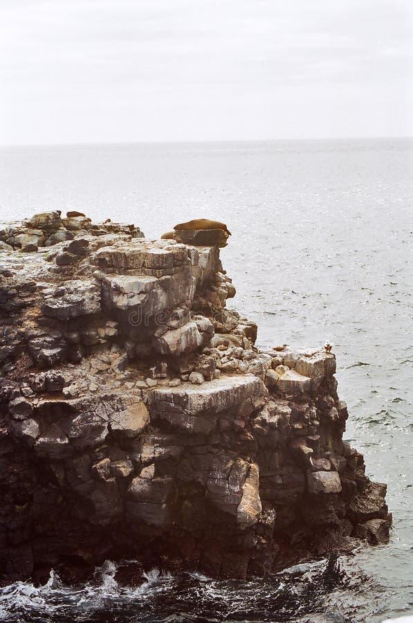 falezy Galapagos lwa morze obrazy stock