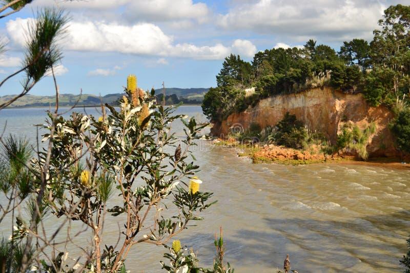 Falezy i drzewa, Shelly plażowy Nowa Zelandia zdjęcia stock