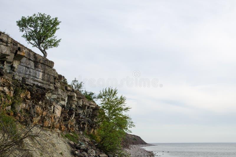 Falezy i samotny drzewo przy costline fotografia stock