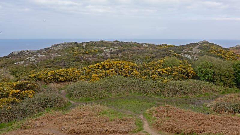 Falezy z roślinnością wzdłuż morza północnego wybrzeża howth, Ireland zdjęcia royalty free