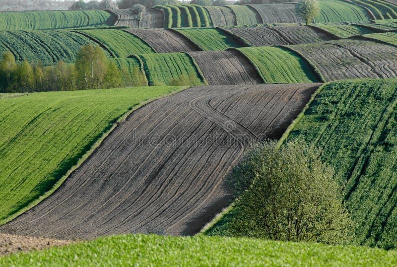 Faliści pola, bajka wzory obrazy royalty free
