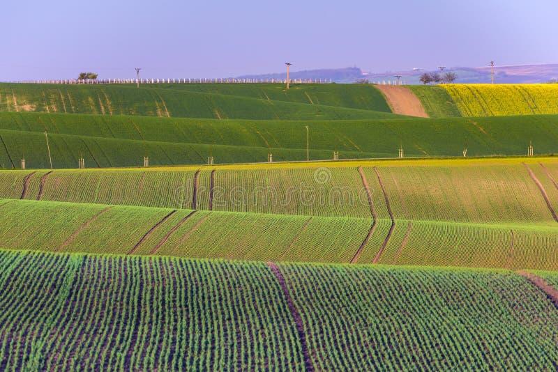 Faliści wzgórza podczas wiosna czasu w Południowym Moravia zdjęcie stock
