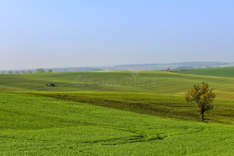 Faliści wzgórza w Południowym Moravia podczas wschodu słońca zdjęcia stock