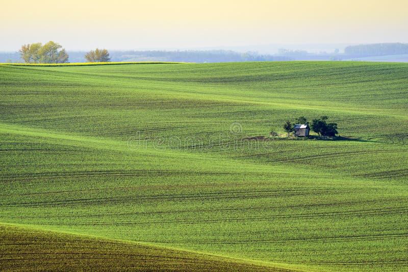 Faliści wzgórza w Południowym Moravia podczas wschodu słońca zdjęcia royalty free