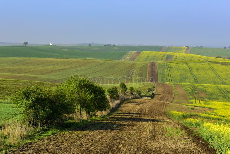 Faliści wzgórza w Południowym Moravia podczas wschodu słońca zdjęcie stock