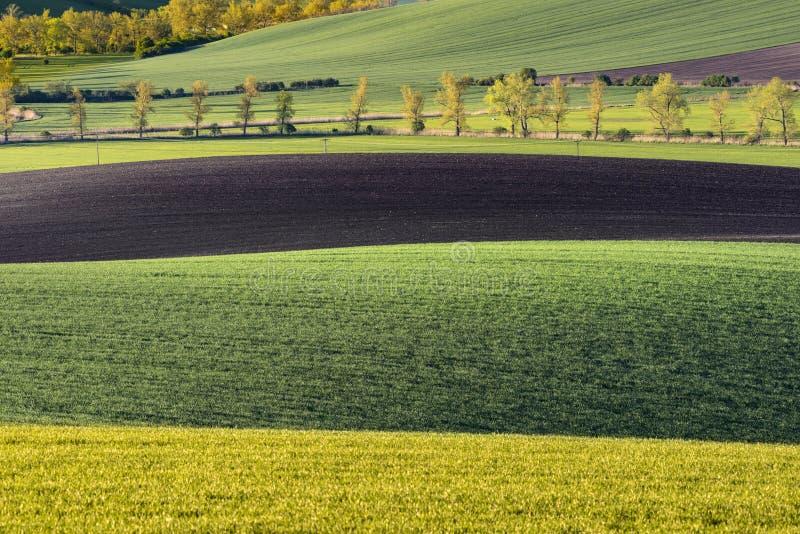 Falisty łąki wiosny krajobraz obraz stock