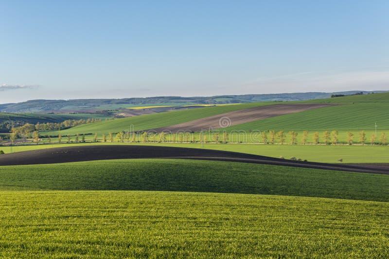 Falisty łąki wiosny krajobraz fotografia royalty free