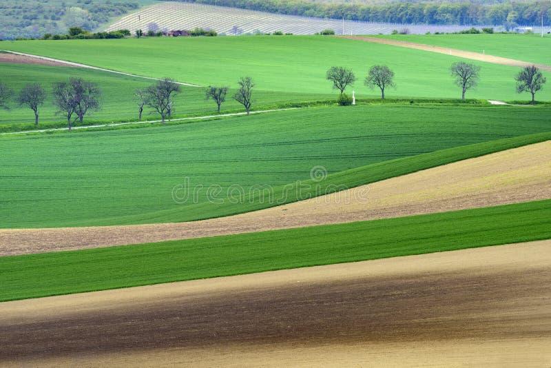 Falisty łąki wiosny krajobraz fotografia stock