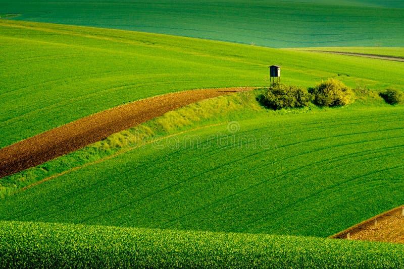 Falisty łąki wiosny krajobraz w Południowym Moravia obrazy stock