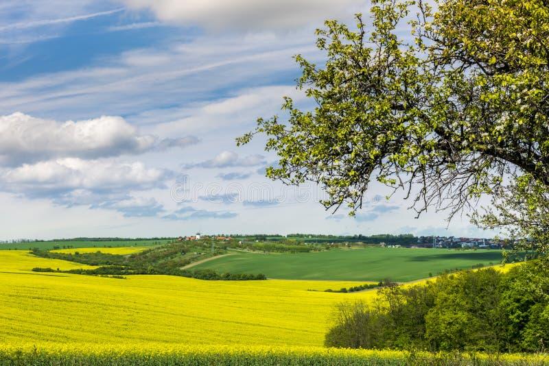 Falisty łąki wiosny krajobraz w Południowym Moravia obrazy royalty free
