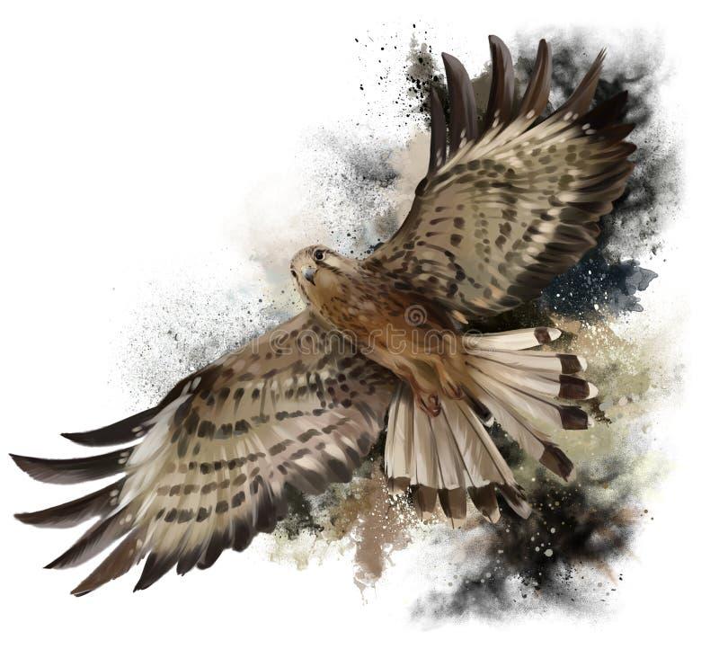 Falk i flyg vektor illustrationer
