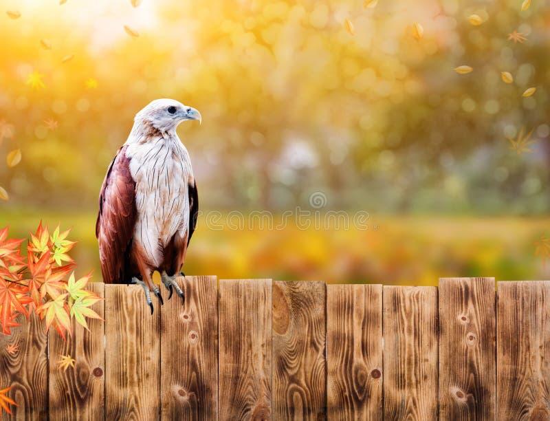 Falke und Adler, J?gervogel im Wald, Tier der wild lebenden Tiere lizenzfreie stockbilder