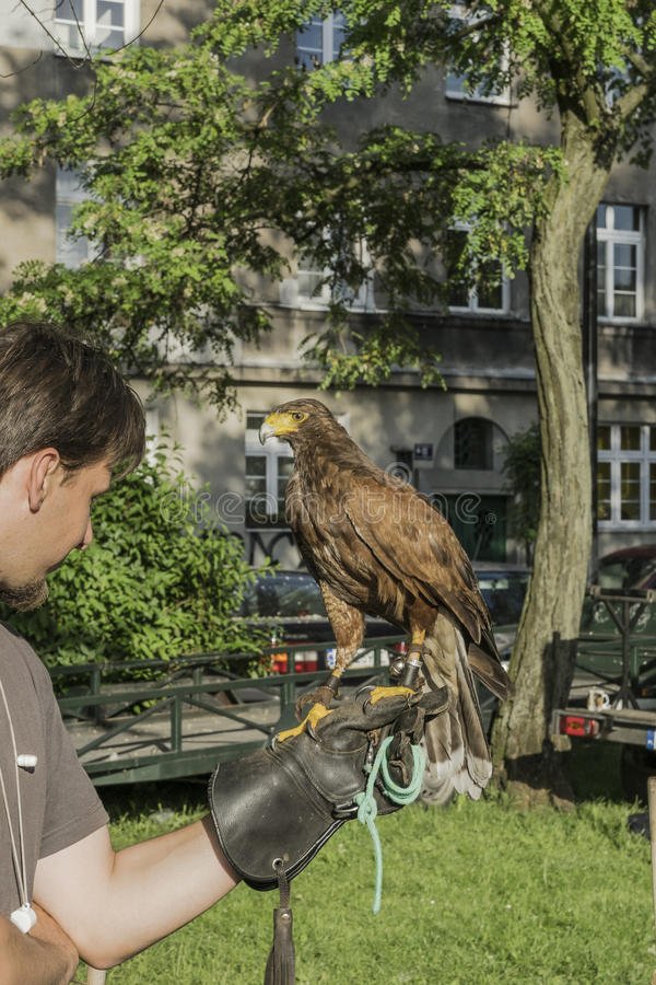 Falkenerare With Falcon royaltyfri bild