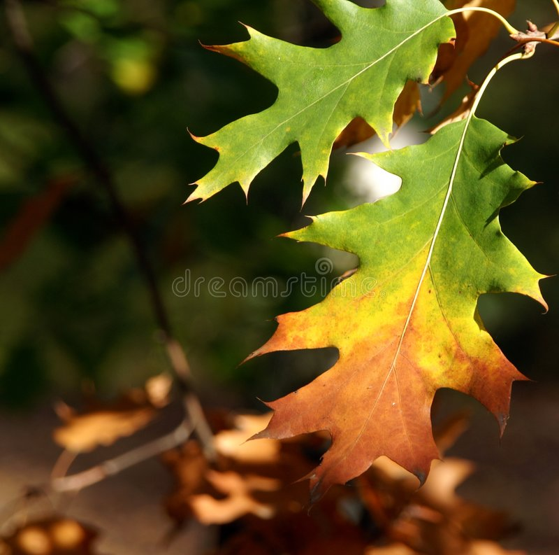 Download Fall stock image. Image of nature, abstractedness, gold - 1410887