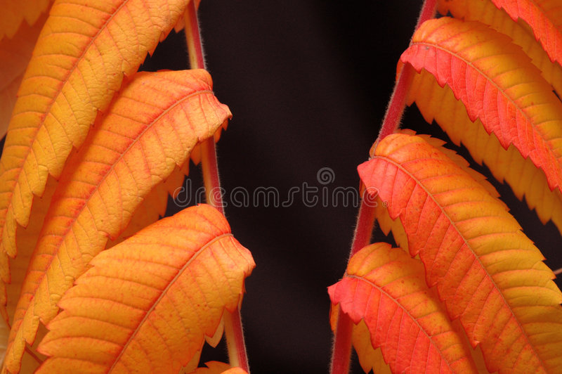 Download Fall stock photo. Image of yellow, fall, leaf, leaves - 1411734