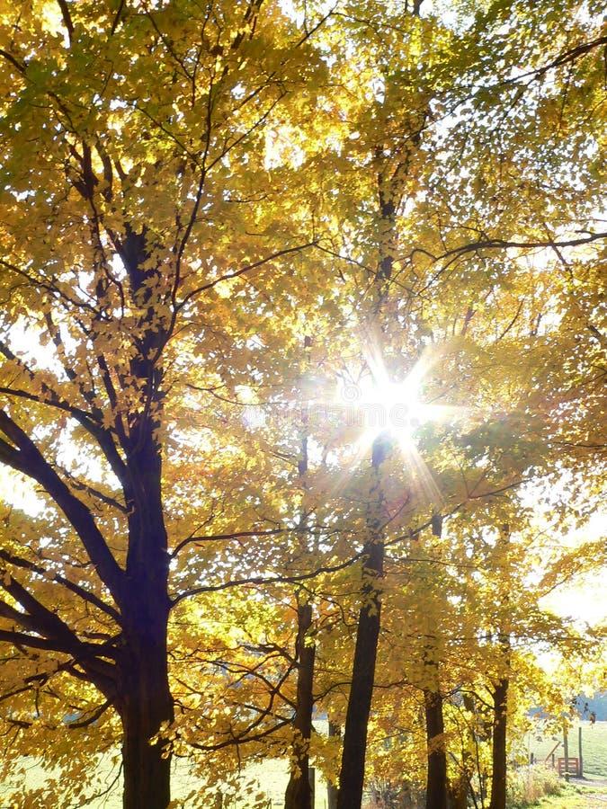 fall στοκ φωτογραφία