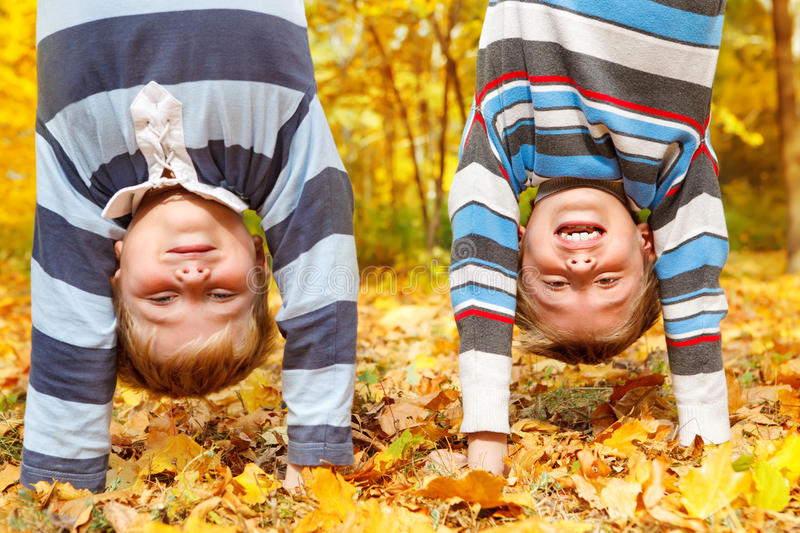 Fall Royalty Free Stock Photos