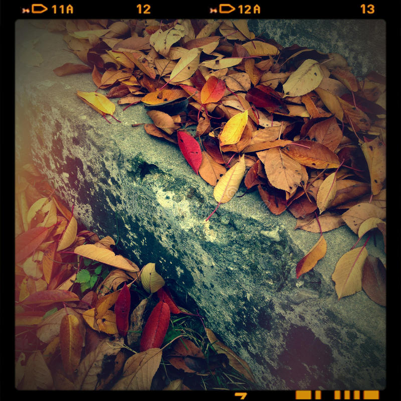 Download Fall stock image. Image of feeling, fall, ancient, atmospheric - 28037265