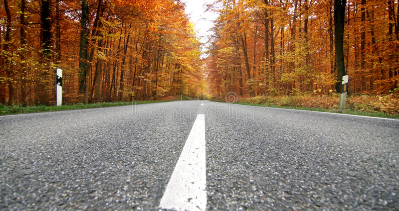 Fall. A road through a forrest in Fall stock images