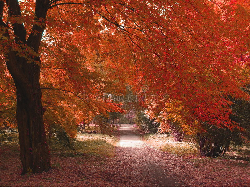 Download Fall fotografering för bildbyråer. Bild av poland, quiet - 508521