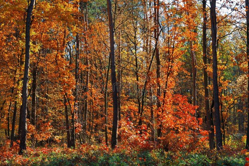Download Fall stock photo. Image of horizontal, forest, fall, nature - 5382170