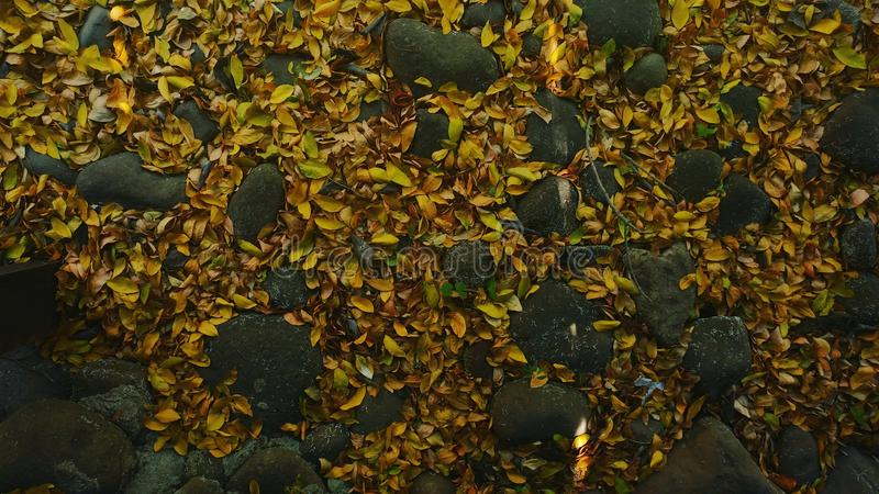 fall royaltyfri bild