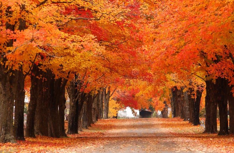 Fall stockbild